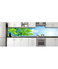 Glass Splashbacks 244